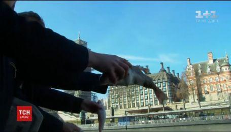 Британские политики, выступающие за выход из ЕС, устроили акцию среди Темзы