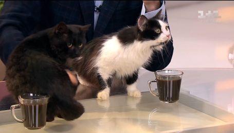 Котики Зара і Бегемот шукають господарів