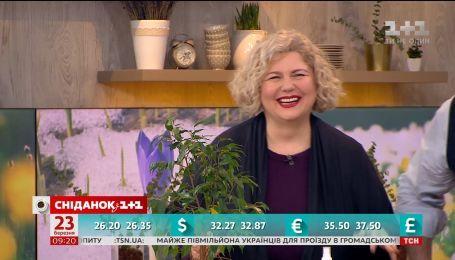 Чим можна покривати ґрунт кімнатних рослин - поради Наталії Підлісної