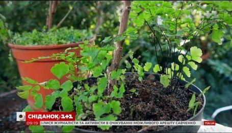 Як підсаджувати ґрунтопокривні рослини у горщики