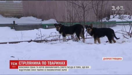 Селяне жалуются на соседа, который отстреливает их животных из пневматического оружия