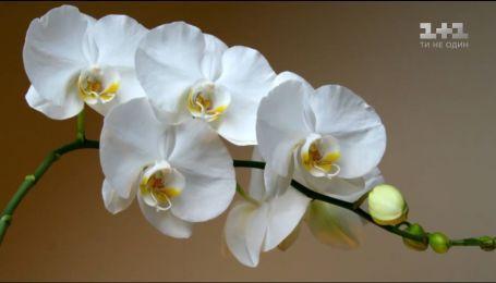 Секрети догляду за орхідеями від Наталі Підлісної