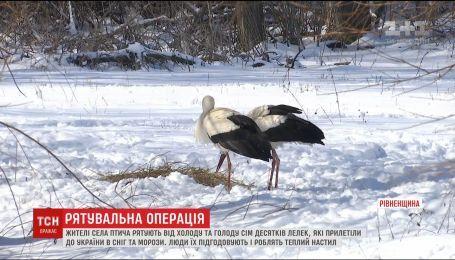 Усе село на Рівненщині підгодовує лелек, аби ті пережили сніг та морози