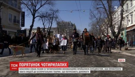В Одесі пройшов Марш врятованих собак, аби привернути увагу до безпритульних тварин