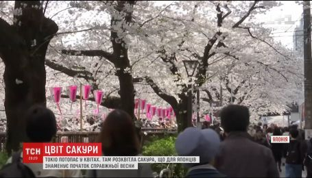 В Японии началась волшебная пора цветения сакуры