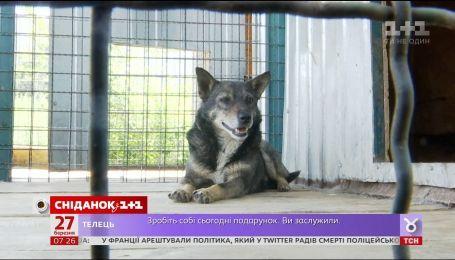 Нужно ли в Украине регистрировать домашних животных
