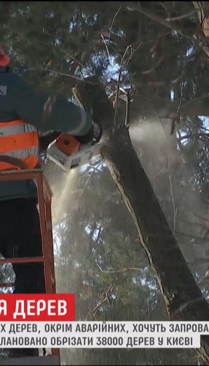 У Києві хочуть заборонити радикальне обрізання дерев