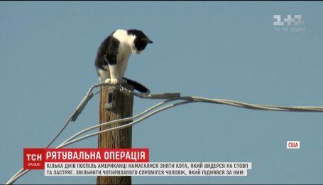 Жители американского города Финикс несколько дней подряд пытались снять со столба кота