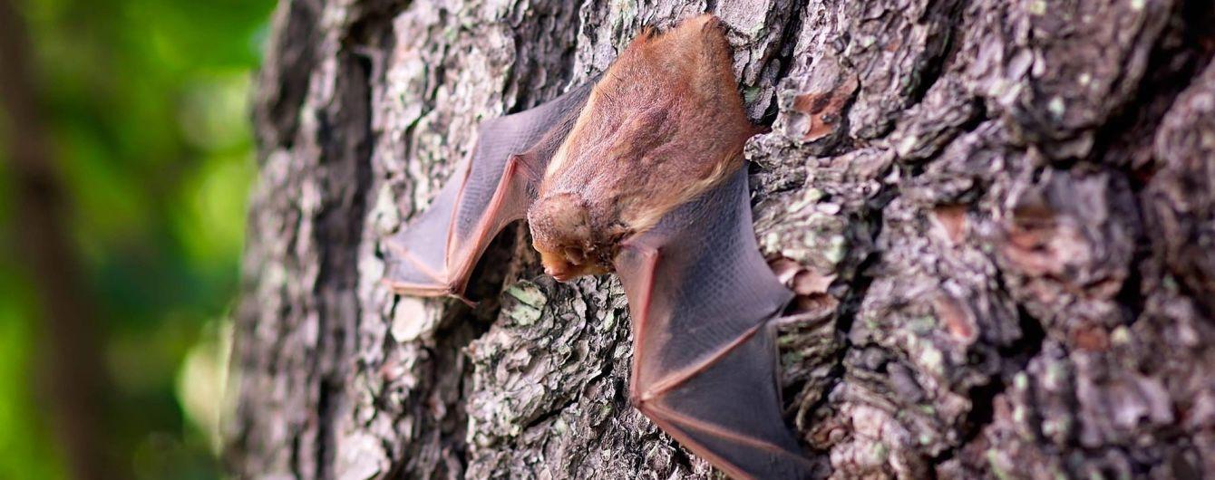 В Днепре отравили полсотни краснокнижных летучих мышей