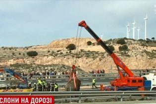 В Испании в ДТП перевернулась фура со слонами