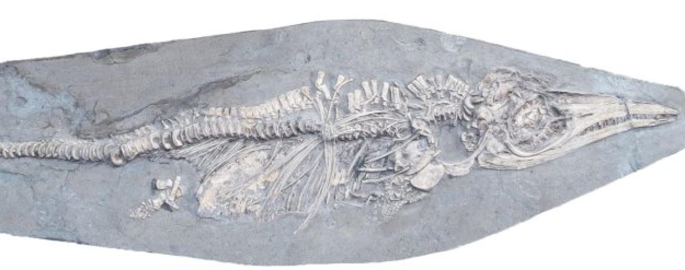 В Великобритании ученые нашли беременного ихтиозавра, которому 180 млн лет