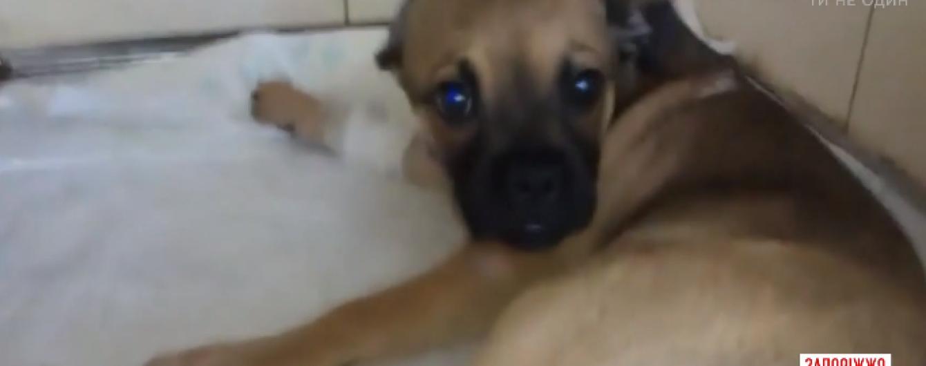 В Запорожье женщина выбросила с 4-го этажа щенка, который перестал ей нравиться