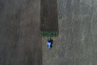 В Одеській області посуха знищила половину врожаю озимих зернових – фермери
