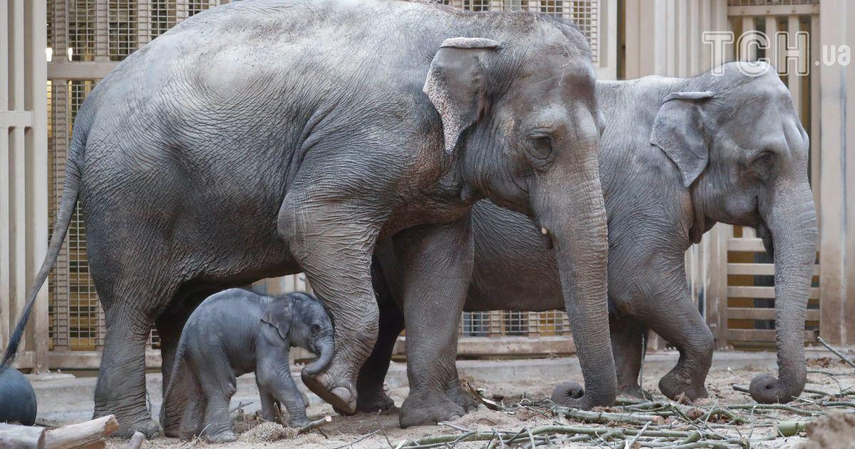 Слони, Мехелен, Бельгія