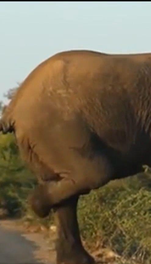 У ПАР фотографам вдалось зафільмувати, як слон влаштував зарядку перед крутим підйомом