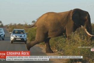 Слоновая йога посреди трассы взорвала Сеть