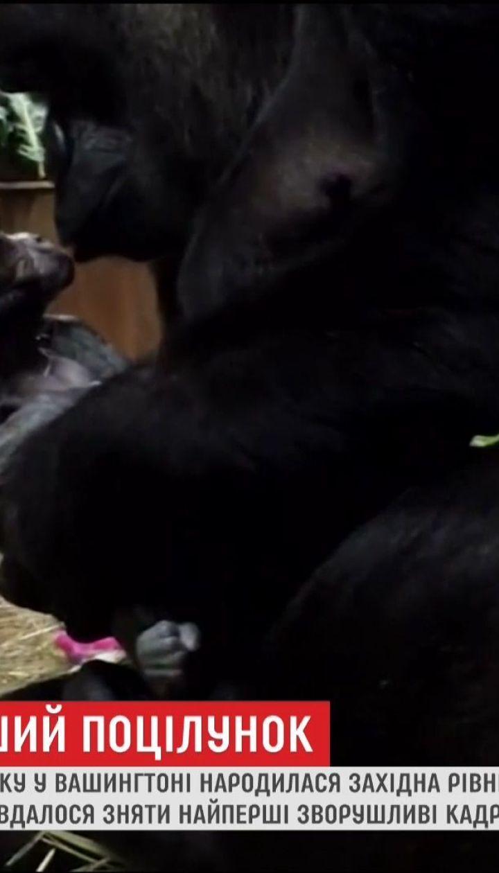 В зоопарке Вашингтона сняли рождения гориллы