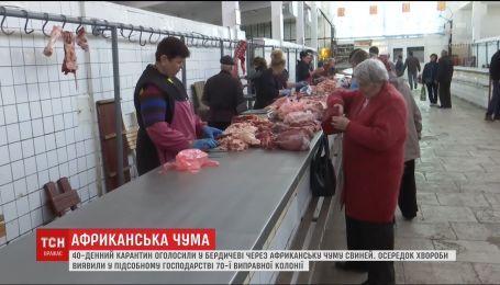 Через спалах африканської чуми свиней у Бердичеві оголосили карантин