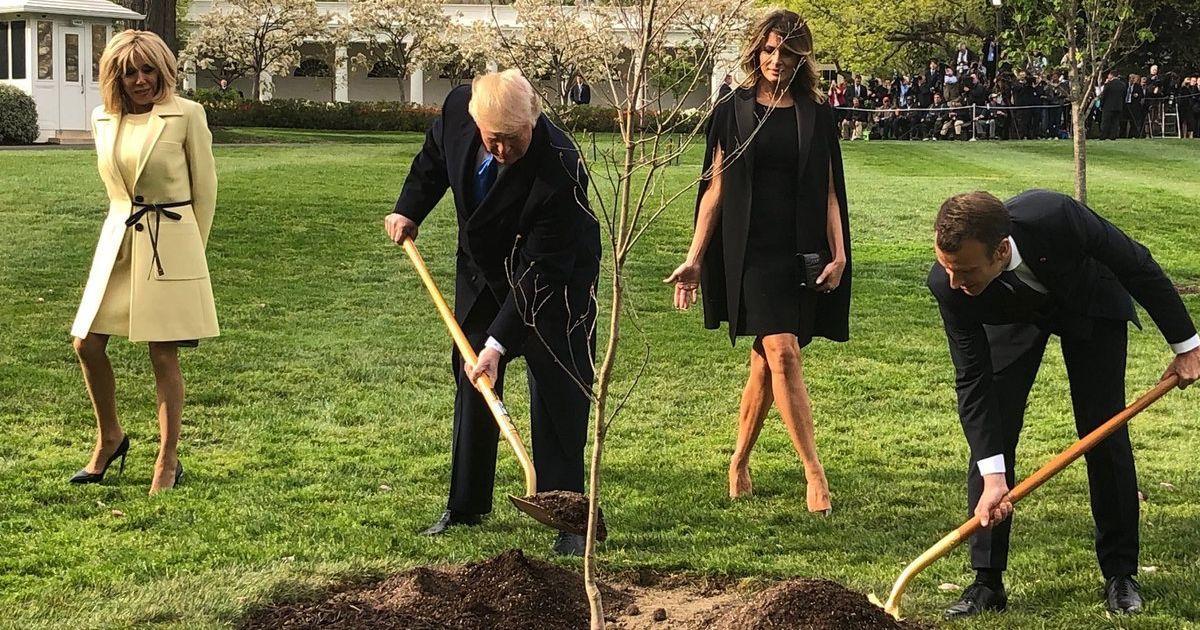 Трамп и Макрон сажали дерево в присутствии своих жен.