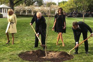Дерево Трампа и Макрона погибло