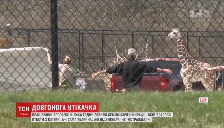 7-месячная жирафа вырвалась на волю из детского зоопарка в городе Форт-Уэйн