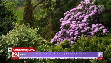 Мой путеводитель. Грузия - Батумский ботанический сад, Башня Азбуки и шоу фонтанов