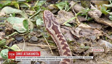 В Україні 3 дітей потрапили до реанімації після укусів гадюк