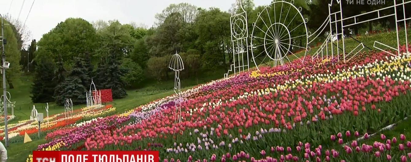 """Певческое поле покрылось тысячами тюльпанов с композициями """"Вокруг света"""""""