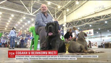 Владельцы собак крупных пород рассказали о сложностях выживания воспитанников в мегаполисе