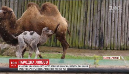 В британском зоопарке верблюда назвали в честь новорожденного принца Луи