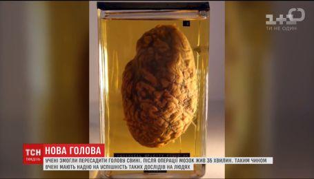 Вченим вдалося відновити мозок померлої свині