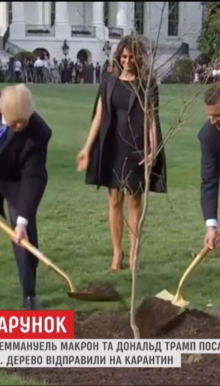 Дуб, посаженный Макроном и Трампом перед Белым домом, исчез с поляны
