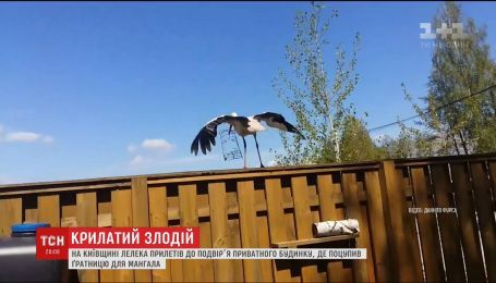 На Київщині лелека поцупив з подвір'я приватного будинку решітку для мангалу
