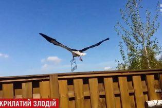 Аист украл барбекю с частного двора на Киевщине