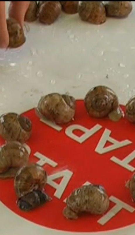 На Закарпатті провели змагання равликів у швидкості
