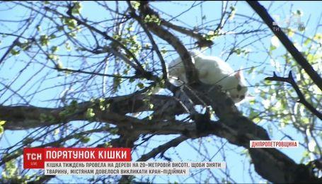 В Каменском кошка провела неделю на 20-метровом дереве
