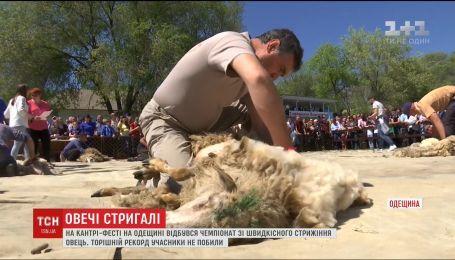 В Одесской области состоялся чемпионат по скоростной стрижке овец