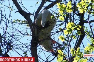 В Каменском горожане спасли кошку, которая неделю просидела на верхушке дерева
