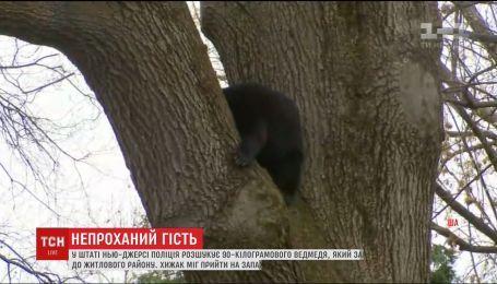 В Нью-Джерси медведь вплотную приблизился к жилым домам и заснул на дереве