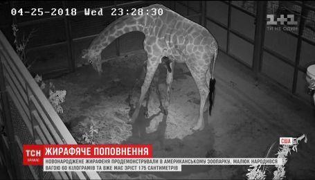 В зоопарке Далласа показали новорожденного жирафа