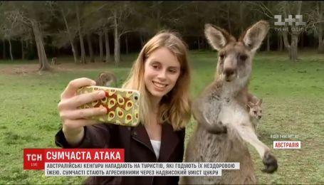 Австралийские кенгуру нападают на туристов, ибо те кормят их вредной пищей