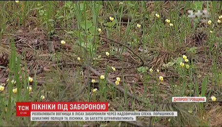 На Дніпропетровщині через спеку заборонили розводити багаття у лісах