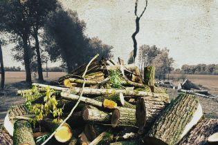 Вирізали всі лісосмуги. На Київщині масово вирубують тополі вздовж доріг