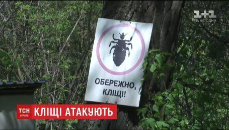Небезпечний укус: у столичних парках знайшли кліщів, інфікованих хворобою Лайма