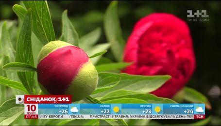 Ирина Гулей рассказала, почему ботсад имени Гришко - одно из самых популярных мест на майские