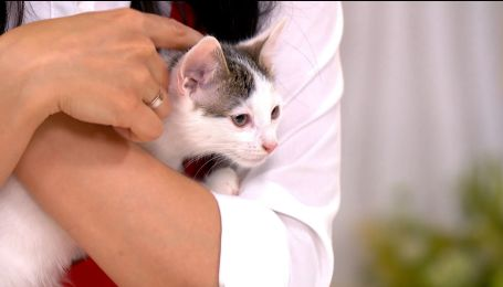 Раздаем котиков: Лео и Миу ищут хозяев