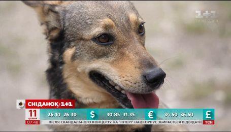 Киевский Хатико: история брошенного на трамвайной остановке собаки