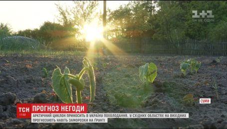 Похолодание в Украине: пошли ли на пользу урожаю нынешние погодные капризы