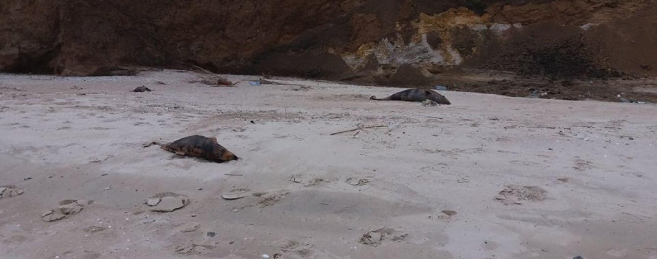 Под Мариуполем нашли мертвых дельфинов