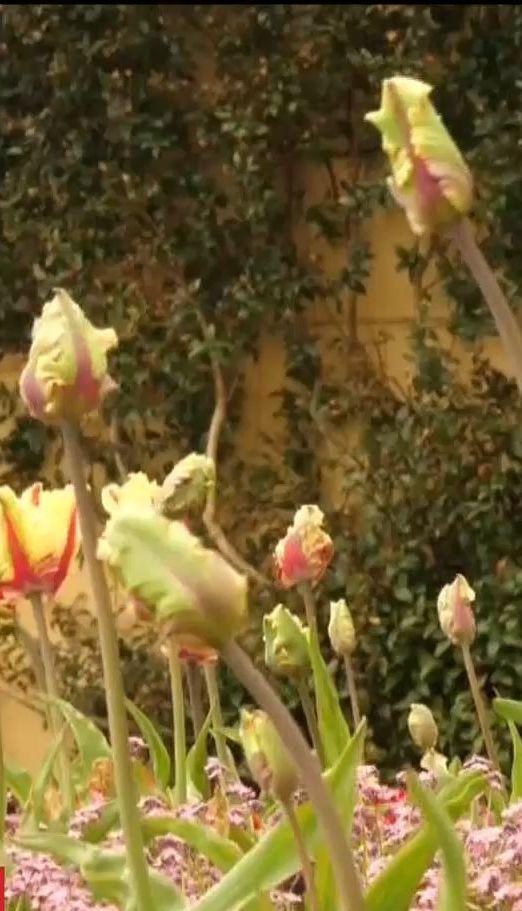 ТСН розповіла про важливість квітів на королівських весіллях у Британії